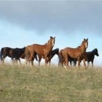 Tucson Real Estate Sales Horse Properties